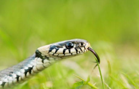 פרשת השבוע וארא – הנחש תנין והמטה